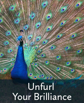 Unfurl Your Brilliance